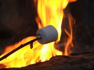 Toasted Marshmallows over a Kent Campfire